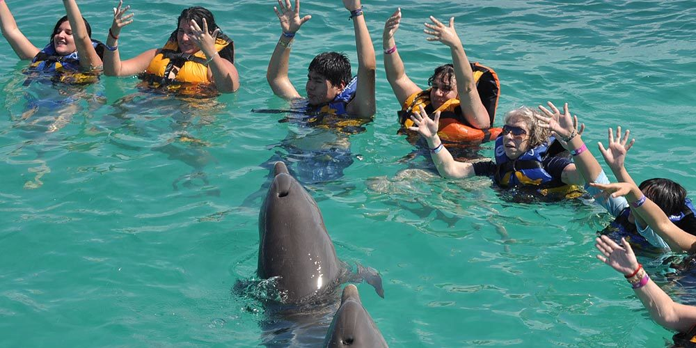 Interactive Swim with Dolphins